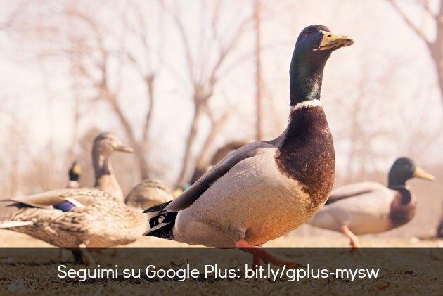 seguire google